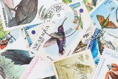 Штемпеля почтового сбора с темой птицы Стоковое Фото