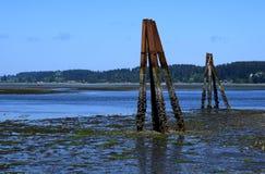 Штендеры во время малой воды, остров ванкувер Royston Стоковое Изображение RF