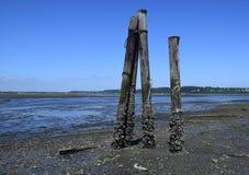 Штендеры во время малой воды, остров ванкувер Royston Стоковое Фото