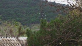 Штендеры леса высоковольтные за домом около леса видеоматериал