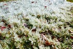 Штендер льда в парке Стоковые Фото