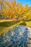 Штендер льда и деревья осени Стоковое фото RF