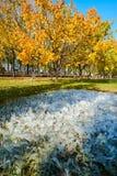 Штендер льда и золотые листья Стоковая Фотография