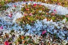 Штендер льда и красочные листья Стоковое фото RF