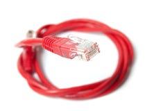 штепсельная вилка сети Стоковое Изображение RF
