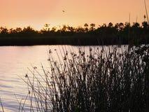 штилевая вода Стоковая Фотография RF