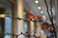 Штиль, идиллия, сработанность, ветвь цветка на предпосылке жизни стоковые фотографии rf