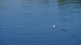 штилевое озеро дня Стоковые Изображения RF