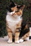 штилевой кот Стоковые Фотографии RF