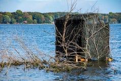 Шторки утки в воде озера стоковое фото rf