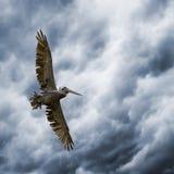 шторм всадника Стоковое Изображение