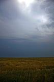 Шторм в пшеничном поле стоковые изображения