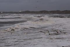 Шторм в Nr Vorupoer на побережье Северного моря в Дании Стоковая Фотография RF