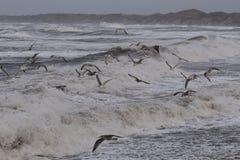 Шторм в Nr Vorupoer на побережье Северного моря в Дании Стоковые Изображения