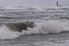 Шторм в Nr Vorupoer на побережье Северного моря в Дании Стоковое Фото