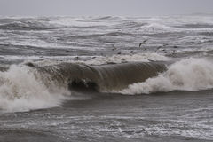 Шторм в Nr Vorupoer на побережье Северного моря в Дании Стоковое Изображение RF