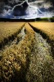 Шторм лета над пшеничным полем стоковая фотография