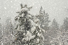 Шторм зимы леса Стоковые Фото