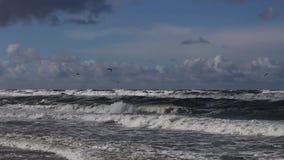Шторм на Балтийском море сток-видео