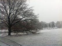 Шторм снега в Central Park - Нью-Йорке Стоковое Изображение RF