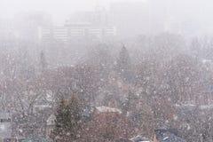 Шторм снега зимы в Торонто в феврале стоковое фото rf