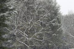 Шторм снега Стоковые Фотографии RF