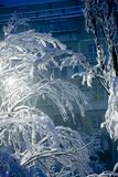 шторм снежка Стоковое Изображение