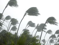 шторм тропический Стоковое Фото