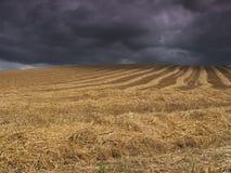 шторм хлебоуборки стоковое фото rf