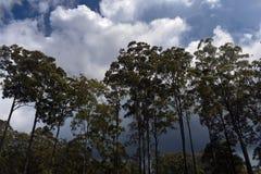 Шторм через деревья стоковая фотография rf
