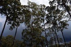 Шторм через деревья стоковые изображения rf
