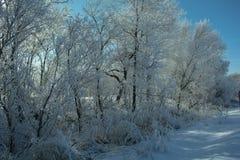 Шторм льда Стоковые Фотографии RF