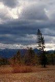 шторм emma Стоковое фото RF