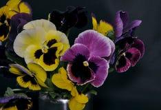 Штраф Heartsease (Виолы tricolor) цветет agains Стоковые Фотографии RF