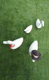 Штукатурка утки для украшения в саде стоковые изображения rf