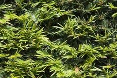 штырь листьев стоковая фотография