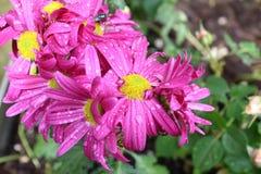 Штырь цветков стоковые изображения rf