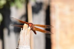Шумовка фейерверка на бамбуке 02 Стоковое фото RF