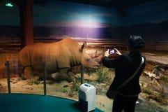Шэньчжэнь, Китай: выставки образца дикого животного Стоковая Фотография