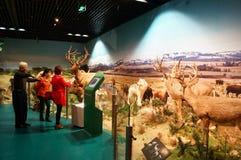Шэньчжэнь, Китай: выставки образца дикого животного Стоковые Изображения RF
