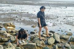 Шэньчжэнь, Китай: люди ищут малые крабы на пляже Стоковые Фото