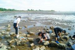 Шэньчжэнь, Китай: люди ищут малые крабы на пляже Стоковое фото RF