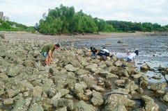Шэньчжэнь, Китай: люди ищут малые крабы на пляже Стоковая Фотография