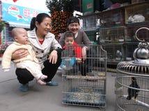 Шэньчжэнь, Китай: орнаментальные птицы Стоковое Изображение RF