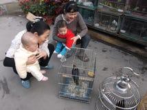 Шэньчжэнь, Китай: орнаментальные птицы Стоковое Изображение