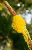 Шлам взбитого яйца Стоковая Фотография