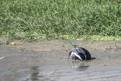 Шлем в болоте Стоковое Изображение