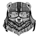 Шлем мотоцикла большого одичалого медведя гризли нося, иллюстрация шлема авиатора для футболки, заплаты, логотипа, значка Стоковые Изображения
