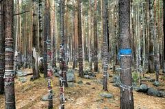 Шлихты на дереве Стоковое фото RF