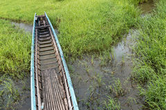 Шлюпка длинного хвоста в зеленых водорослях Стоковое фото RF